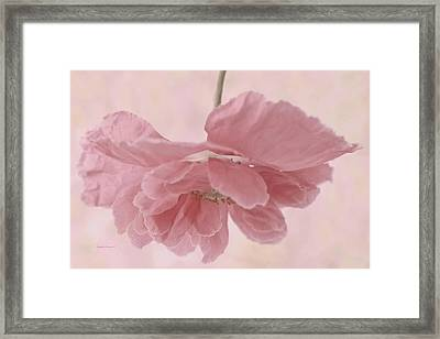 Pretty Pink Poppy Macro Framed Print by Sandra Foster