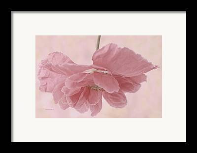 Suspended Pink Poppy Flower Framed Prints