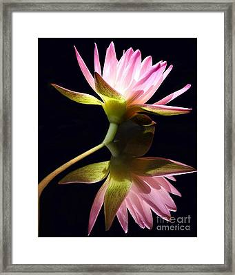 Pretty Pink Reflections Framed Print by Sabrina L Ryan