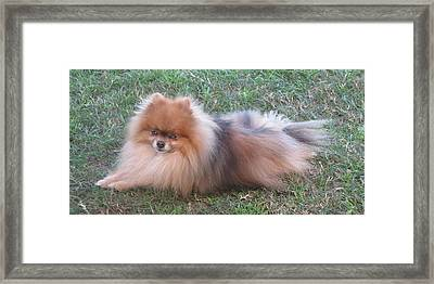 Framed Print featuring the photograph Pretty Pom by Fortunate Findings Shirley Dickerson