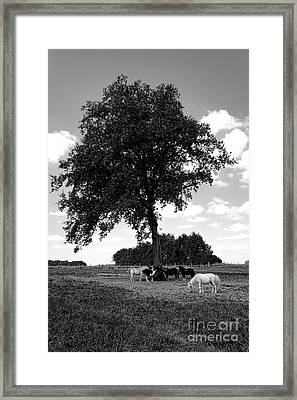 Pretty Ponies Under A Tree Framed Print by Olivier Le Queinec