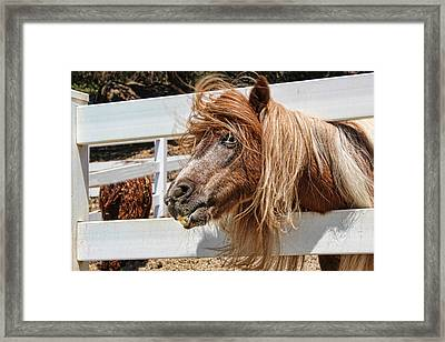Pretty Pony After Framed Print
