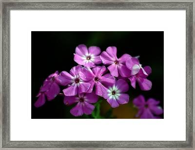 Pretty Purple Framed Print