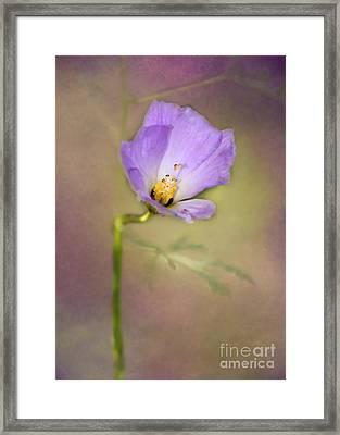 Pretty Purple Flower Framed Print