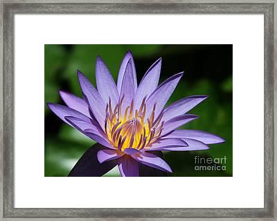 Pretty Purple Petals Framed Print by Sabrina L Ryan