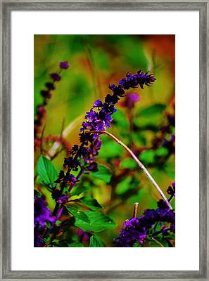 Pretty Purple Plant Framed Print