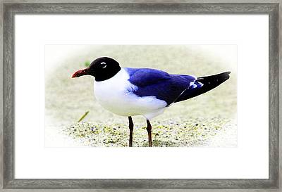 Pretty Swallow Framed Print by Tina M Wenger