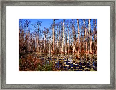 Pretty Swamp Scene Framed Print by Susanne Van Hulst