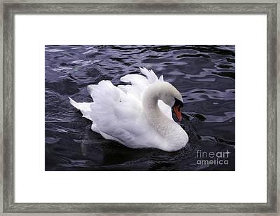Pretty Swan Framed Print