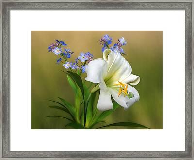 Pretty White Lily Framed Print