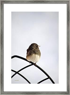 Pretty Winter Junco Framed Print by Christina Rollo