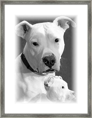 Framed Print featuring the photograph Prettyboy by Robert McCubbin
