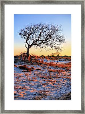 Prevailing Framed Print
