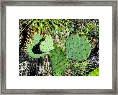 Prickley Hearts Framed Print by Cindy Croal