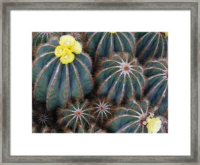 Framed Print featuring the photograph Prickly Beauties by Evelyn Tambour