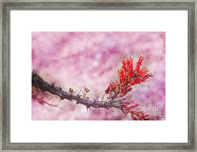 Prickly Beauty Framed Print