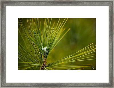 Prickly Beginnings Framed Print