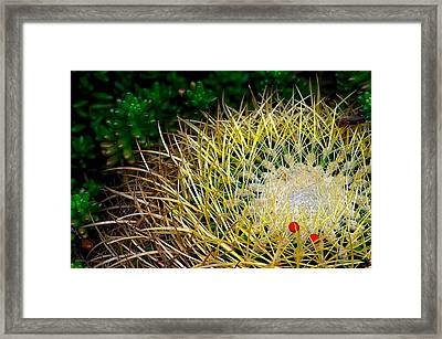 Prickly Framed Print by Camille Lopez
