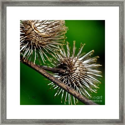 Prickly Framed Print by Lois Bryan