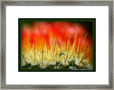 Framed Print featuring the photograph Prickly  by Michaela Preston