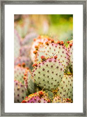 Prickly Pear 1 Framed Print