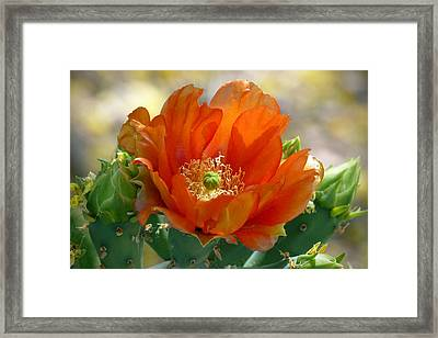 Framed Print featuring the photograph Prickly Pear Beauty by Cindy McDaniel