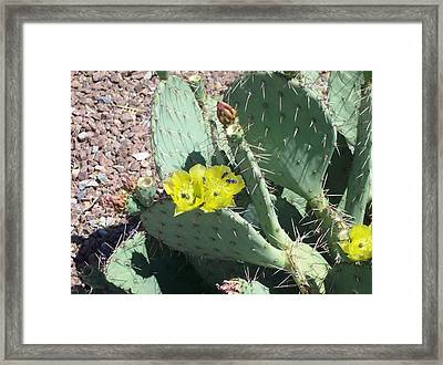 Prickly Pear Bees Framed Print