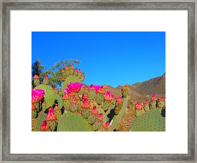 Prickly Pear Blooming Framed Print