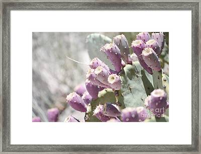 Prickly Pear Cacti Framed Print by Andrea Hazel Ihlefeld