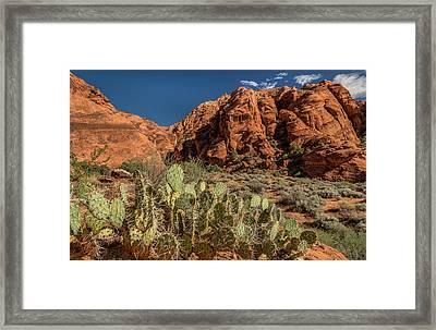 Prickly Pear Cactus Along Water Canyon Framed Print