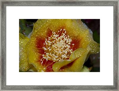 Prickly Pear Cactus Flower Framed Print