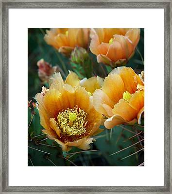 Prickly Pear Cactus Framed Print