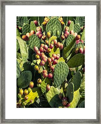 Framed Print featuring the photograph Prickly Pear Cactus Number Three by Bob Coates