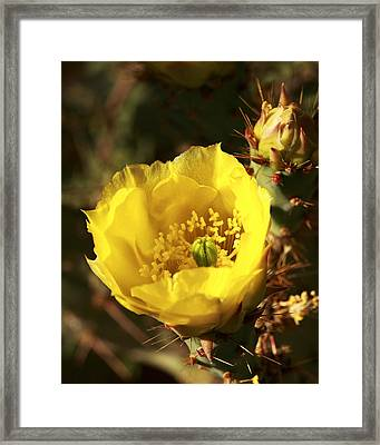 Framed Print featuring the photograph Prickly Pear Flower by Alan Vance Ley