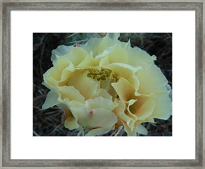 Prickly Pear Framed Print by Jenessa Rahn