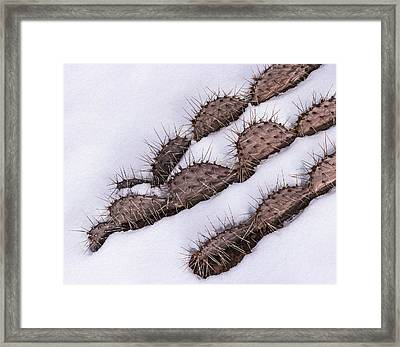 Prickly Pear On Ice Framed Print