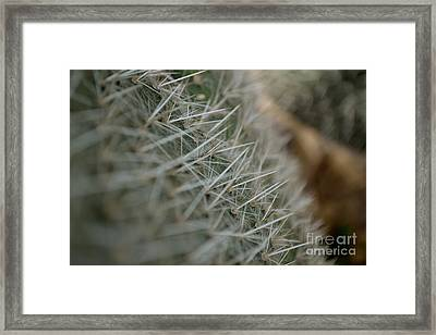 Framed Print featuring the photograph Prickly Pear by Scott Lyons
