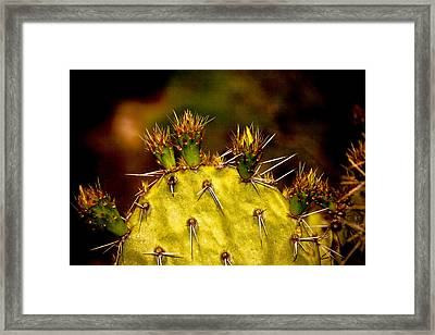 Prickly Pear Spring Framed Print