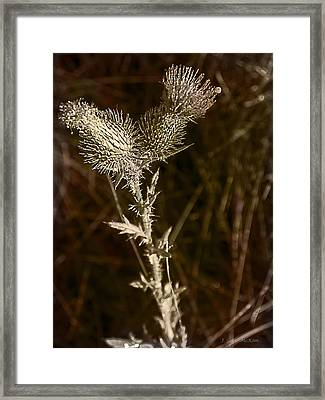Prickly To The End Framed Print by Jo-Anne Gazo-McKim