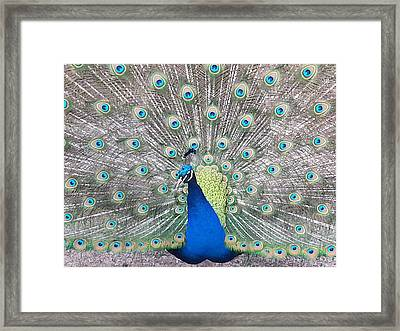 Framed Print featuring the photograph Pride by Caryl J Bohn