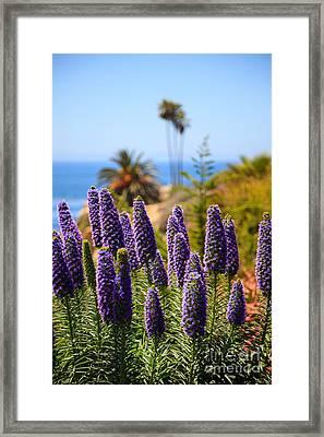 Pride Of Madeira Flowers In Orange County California Framed Print by Paul Velgos