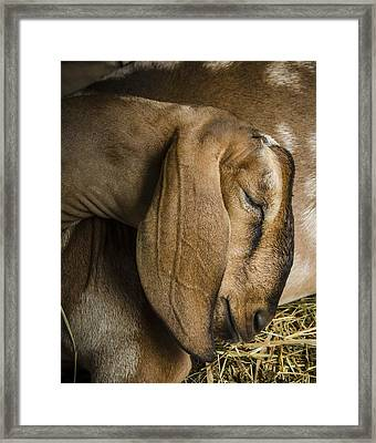 Pride Of The Shepherd Framed Print by Bradley Clay