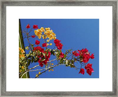 Framed Print featuring the photograph Primary Colors by Ginny Schmidt