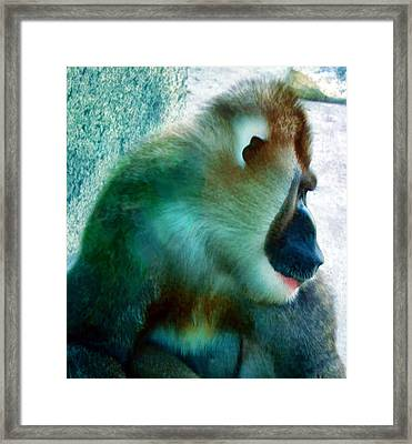 Framed Print featuring the photograph Primate 1 by Dawn Eshelman