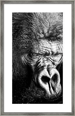 Primate Framed Print by David Millenheft