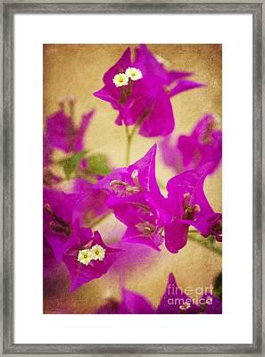 Primavera Framed Print by Pamela Gail Torres