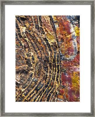 Prime Cut 1 Framed Print by Skip Hunt