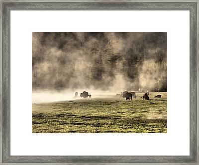 Buffalo Herd In Yellowstone Framed Print