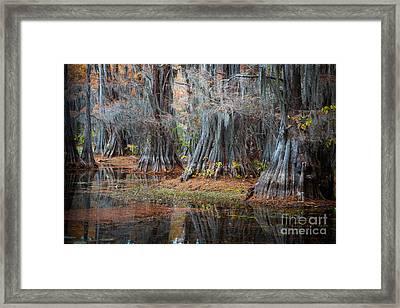Primeval Forest Framed Print by Inge Johnsson
