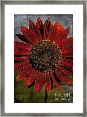 Primitive Sunflower 2 Framed Print